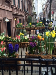 Wow. Wondrous Spring Blooms @ NYC Salon – 2015
