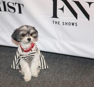 Dog is Fab Fashionista @ NYFW - 2017